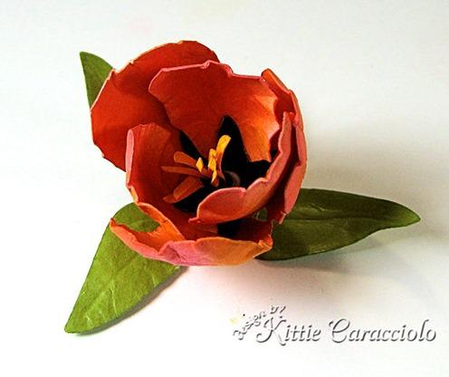 KC Tulip 1