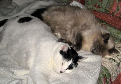 Cassie and Chloe  b 11 08