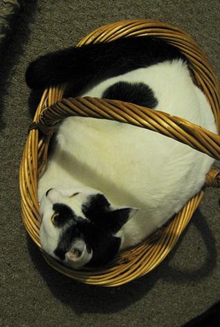 Cassie's New Basket 2 Sept 10
