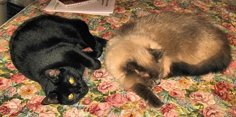 Sophie and Chloe Jan 12 12 2