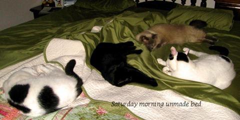 Sat Morning Bed 05 09